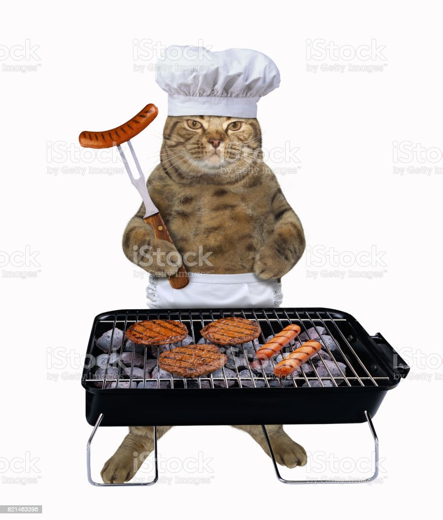 Chat cuisinier avec barbecue - Photo