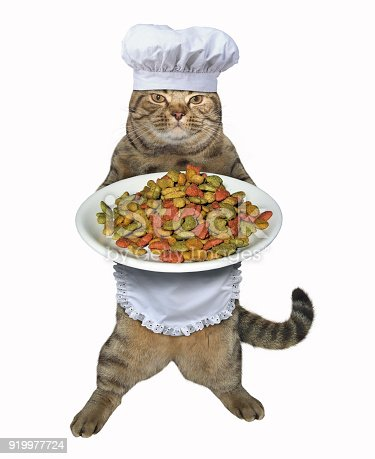 istock Cat cook with dry feed 919977724