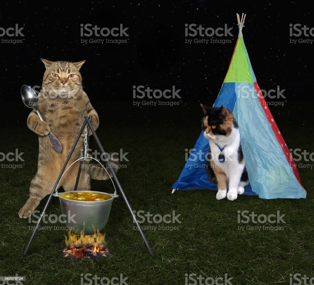 Cat cooks fish soup on the picnic stock photo