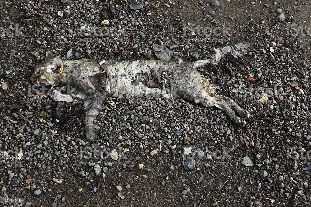 Cat Corpse royalty-free stock photo