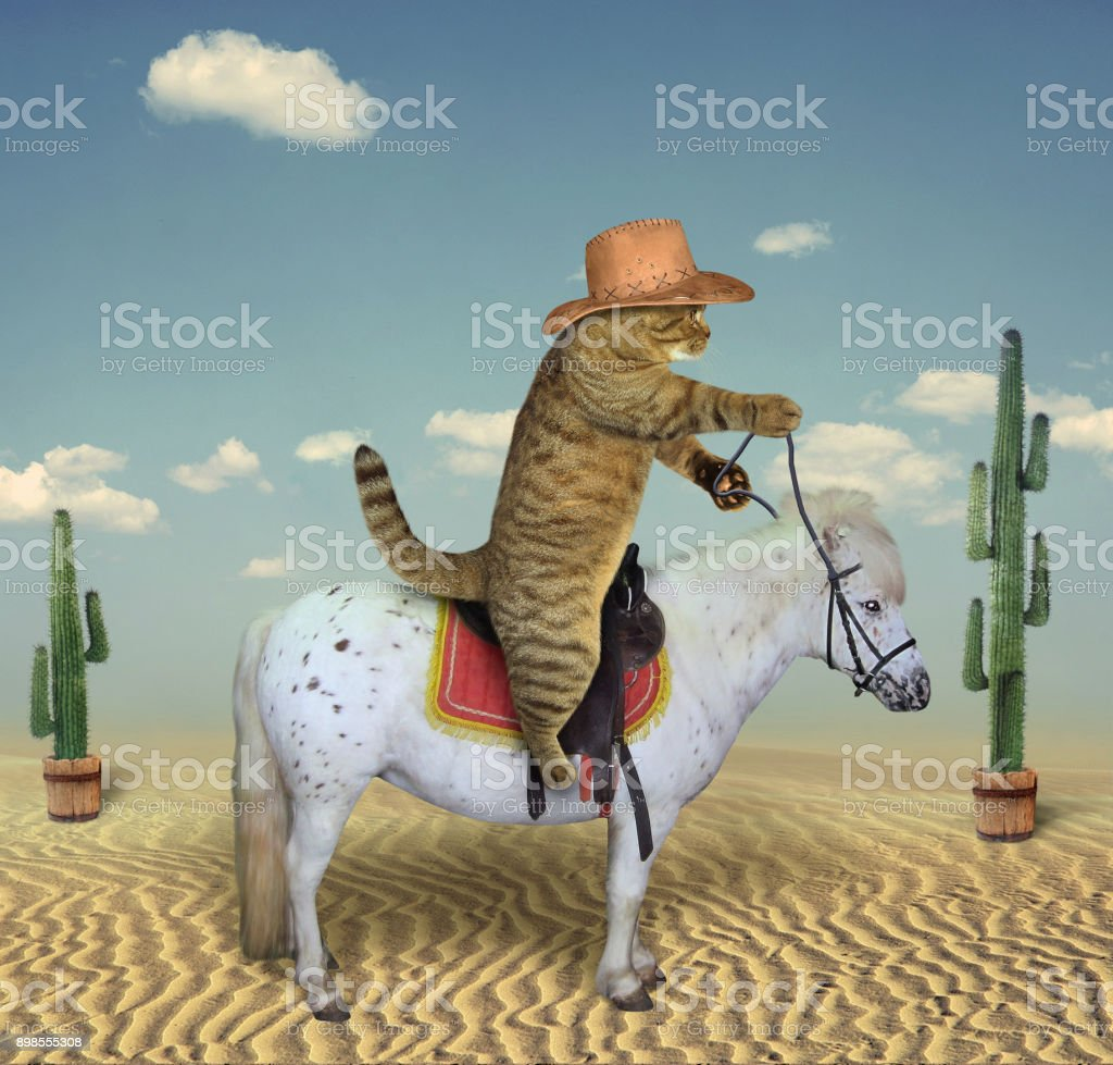 Cat cowboy on a horse 3 stock photo