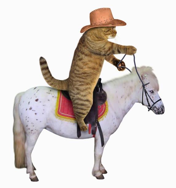 Cat cowboy on a horse picture id896260646?b=1&k=6&m=896260646&s=612x612&w=0&h=5tdz s3lq4pl4g2hthfbh0s0gyzvgzxz84athupmpny=