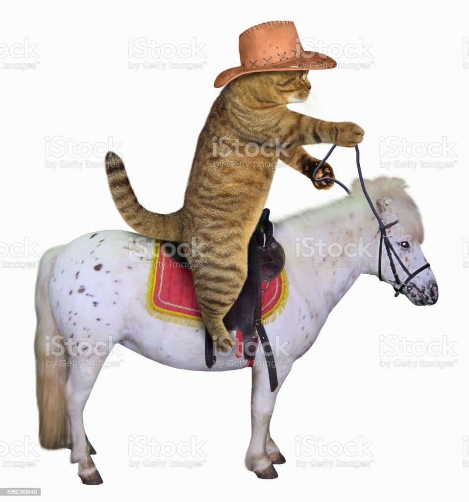 Cat cowboy on a horse stock photo