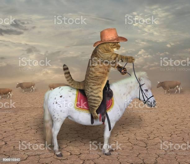 Cat cowboy on a horse picture id896916940?b=1&k=6&m=896916940&s=612x612&h=4e0vo79cfhzry0dr12r wmqpindz iuuxxfxzz5h4uy=