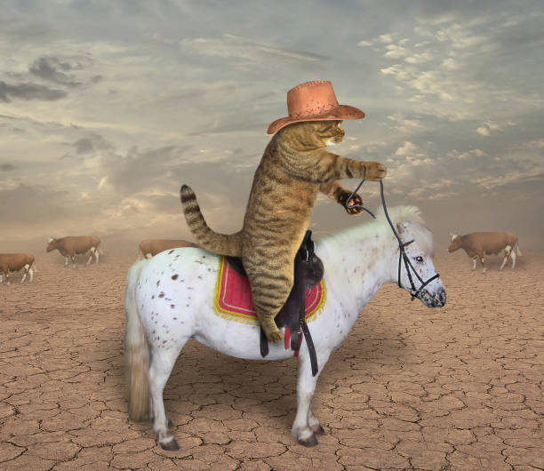 cowboy de chat sur un cheval - humour photos et images de collection