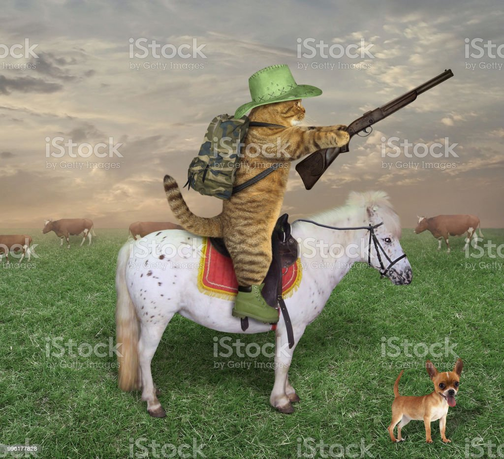 Cat cowboy with a rifle on the ranch stock photo