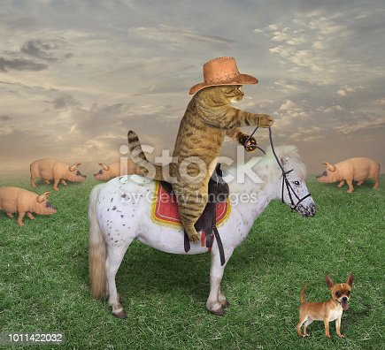The cat cowboy with his dog are guarding a herd of pigs on the ranch.