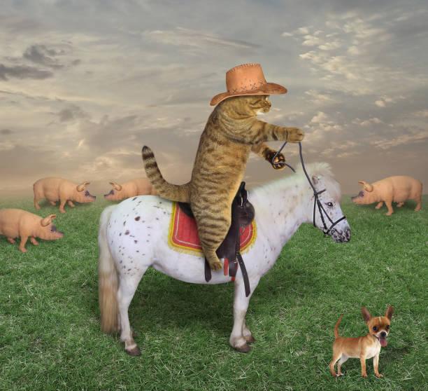 katze-cowboy mit seinem hund auf der ranch - katzengeschirr stock-fotos und bilder