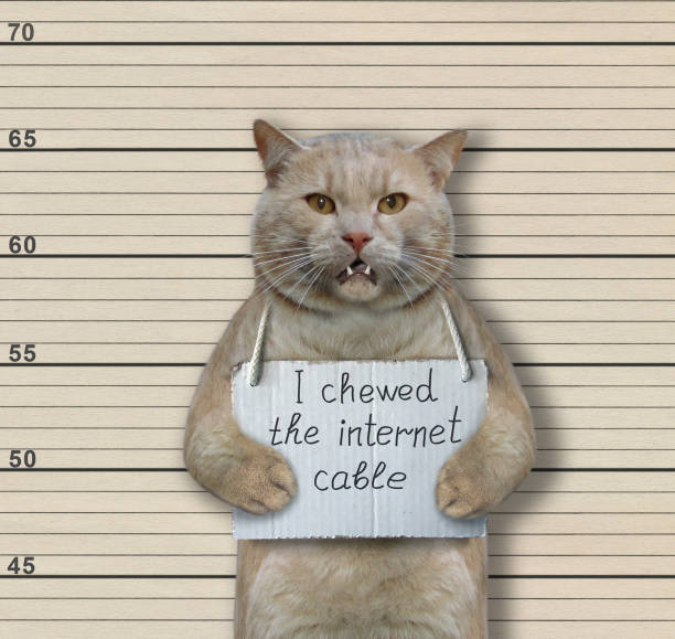 Cat criminal chewed the internet cable picture id1169694639?b=1&k=6&m=1169694639&s=612x612&w=0&h=7olf5ns8fp0s8dtkgfgqhd4n  ym48aruyizteyrqu4=