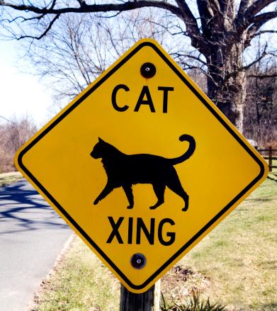 Cat Crossing Road Sign in rural Virginia