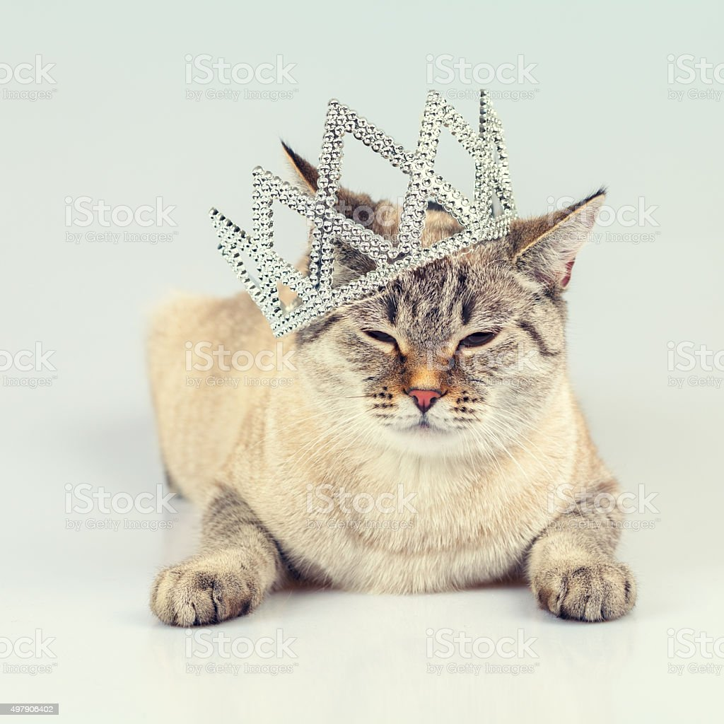 cat-crowned-diadem-picture-id497906402
