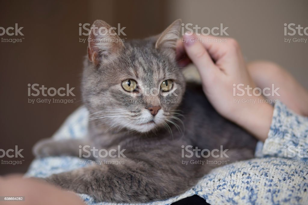 Cat cuddling stock photo