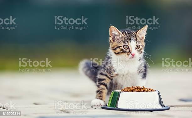 Cat cute little kitten with a bowl of granules picture id619505314?b=1&k=6&m=619505314&s=612x612&h=vclcwq2dkd9fj2pw9vsbo8ahj0a3awu68jjnbhfijjo=