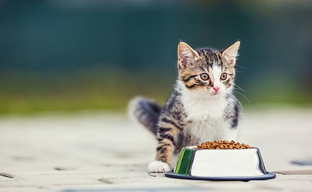 Cat cute little kitten with a bowl of granules picture id619505314?b=1&k=6&m=619505314&s=612x612&w=0&h=man756ikropqvkv28cuh dxmeh azyvcvsz2ce0ep9w=