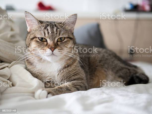 Cat cute sleep on bed picture id582303148?b=1&k=6&m=582303148&s=612x612&h=cui9xtkby7d0ajb8pucucg1wezf01b1hzntkzlggoy4=