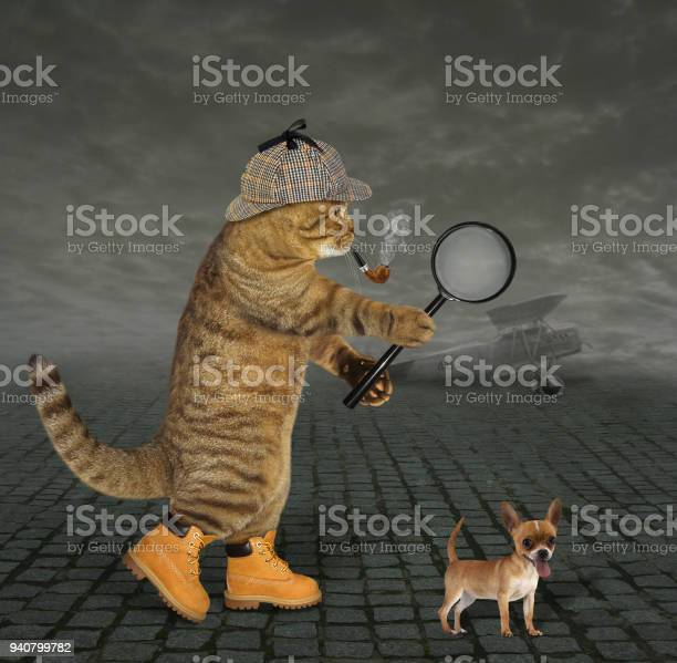 Cat detective at the airfield picture id940799782?b=1&k=6&m=940799782&s=612x612&h=icgghnepiyokogc jazrpg0zcwxrlmgnlddlr75 hjo=