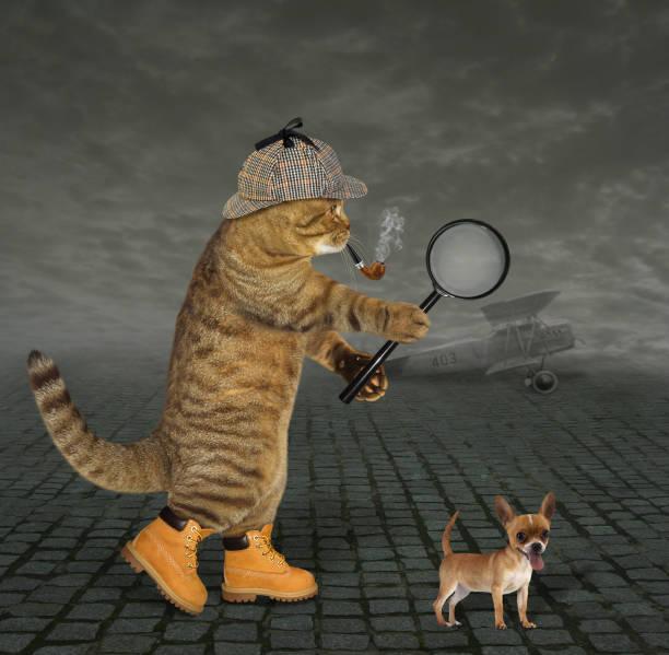 katze-detektiv auf dem flugplatz - suche katze stock-fotos und bilder