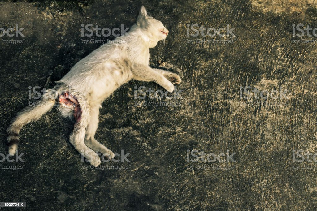 cat died by accident on the road stock photo