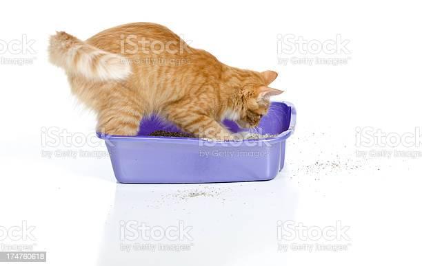 Cat digging in litter box picture id174760618?b=1&k=6&m=174760618&s=612x612&h=ege0oswlyrhpy5v94uvmwdzrv1camca2ub jvgvjwbm=