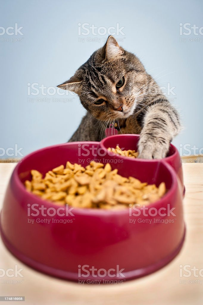 A cat dipping its paw into its food bowl stock photo