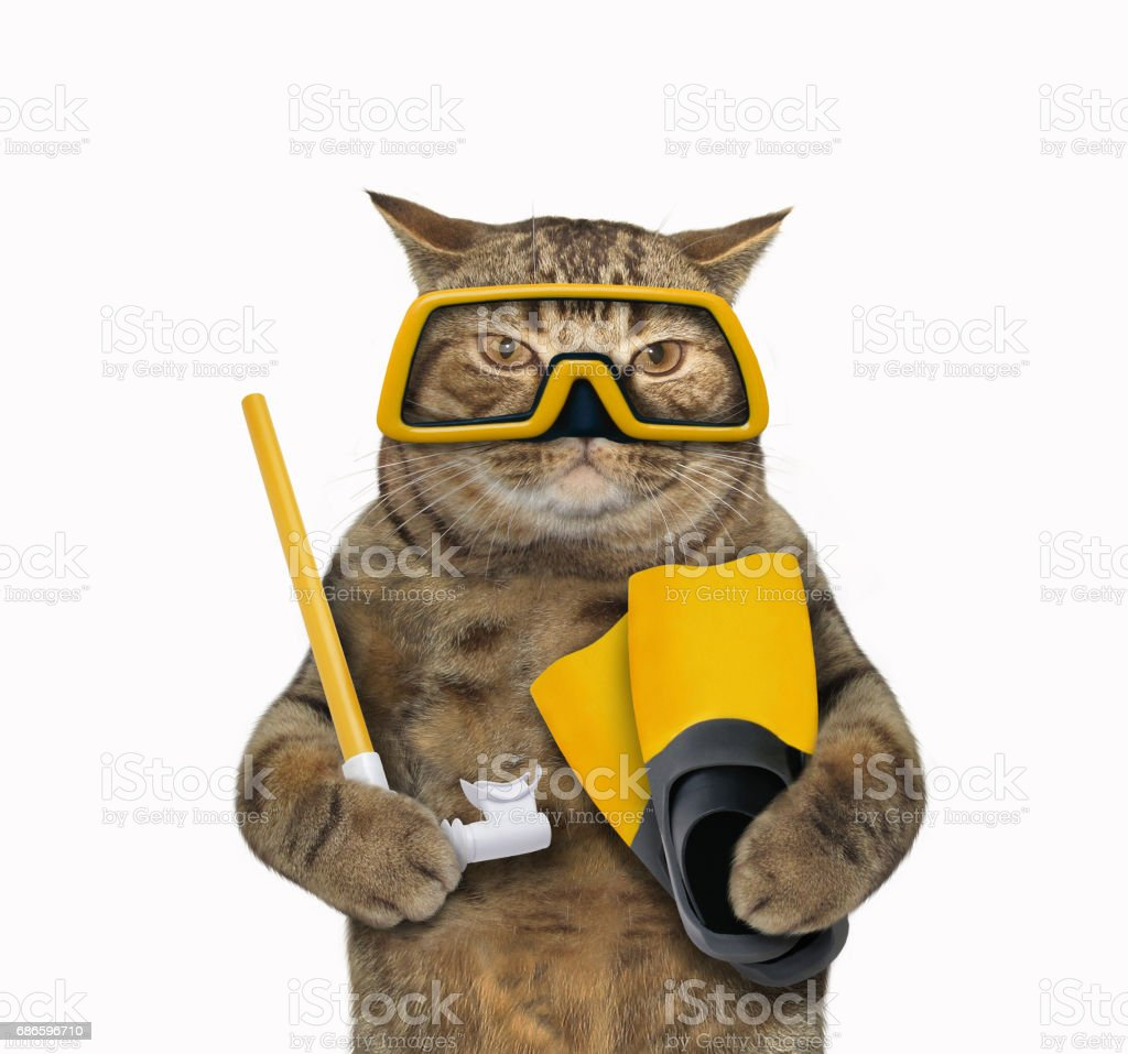Cat diver 1 royalty-free stock photo