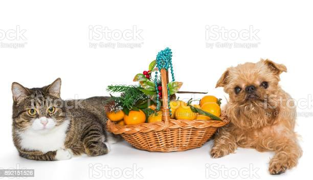 Cat dog and christmas basket picture id892151526?b=1&k=6&m=892151526&s=612x612&h=3g6fgmdjffuyl hkw25g7znfgn2m2tgcnwwzpr zax8=