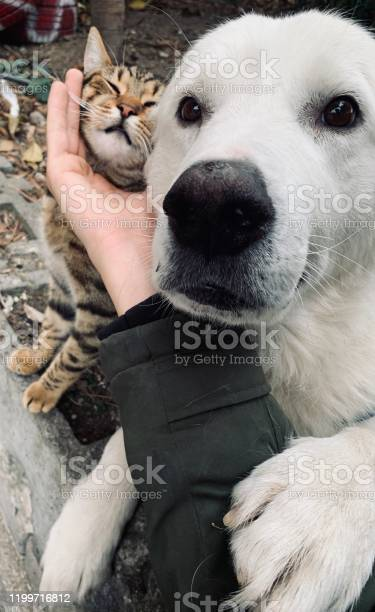 Cat dog friendship picture id1199716812?b=1&k=6&m=1199716812&s=612x612&h= gwj3ggyci06s1vxlgvoaxkhwqlahlr5e7l snny5am=
