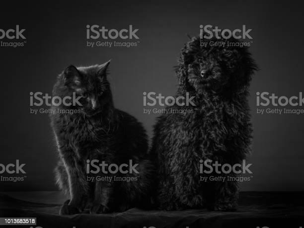 Cat dog picture id1013683518?b=1&k=6&m=1013683518&s=612x612&h=k3erxygp9yp7up eamyhoduethmyxjziepg r mvqaq=