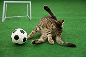 cat don't care about soccer