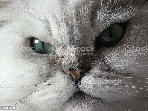 Cat dont look back in anger picture id173613768?b=1&k=6&m=173613768&s=612x612&h=mrqn6 5cw3gcblysv85hmdxlv9aelxof8g1chvo2m c=