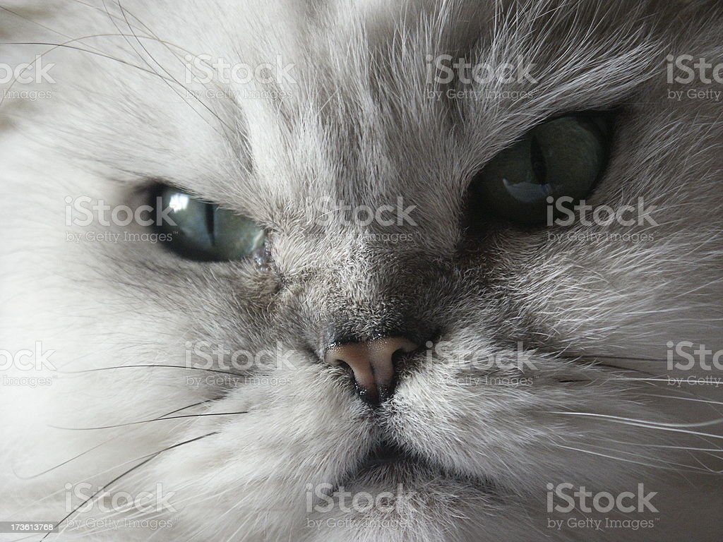 cat: don't look back in anger stock photo