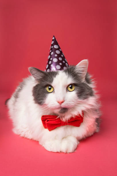 Cat Dressed in Bow Tie and Party Hat stock photo