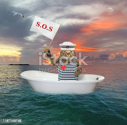 The cat sailor is drifting in the bathtub in the open sea after shipwreck. It holds a sign that says sos.