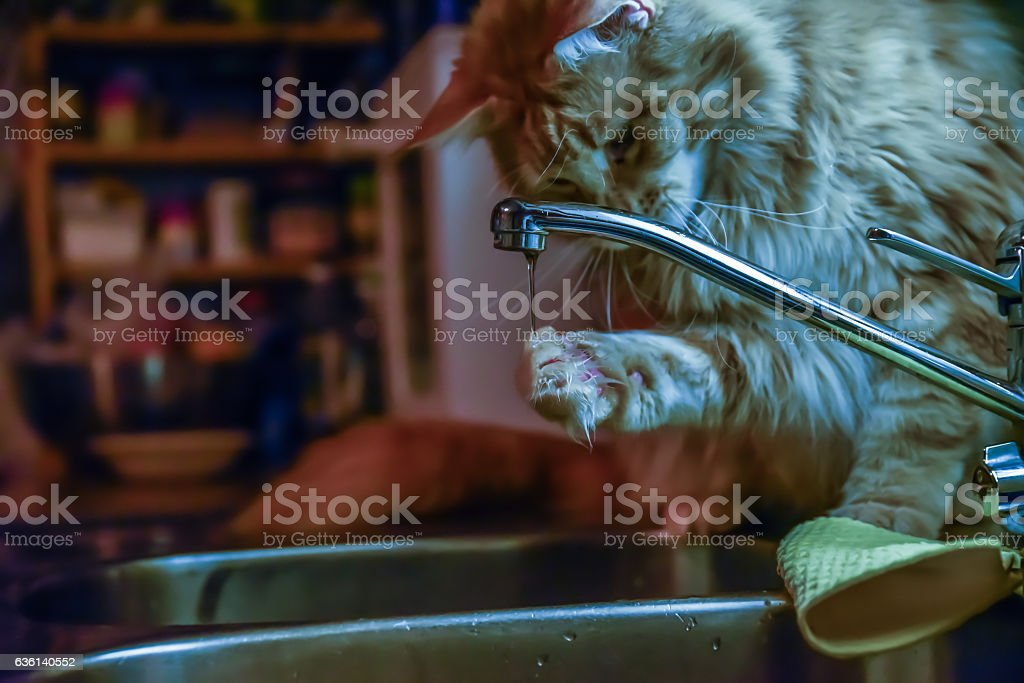Cat drinking at faucet stock photo