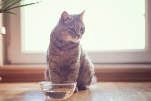 Cat drinking water picture id647288692?b=1&k=6&m=647288692&s=612x612&w=0&h=4nvbbuvoajwle6mm8rlbgrfchqhminofhuf1jd8f2uc=