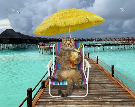 Cat drinks cold tea on wooden pier