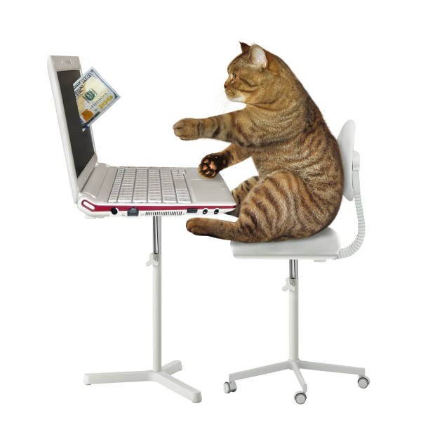 Cat earns money on the computer picture id1138857634?b=1&k=6&m=1138857634&s=612x612&w=0&h=istl14hcy9dyzqdcwwjioihm2cxih4glm898qqx9waw=