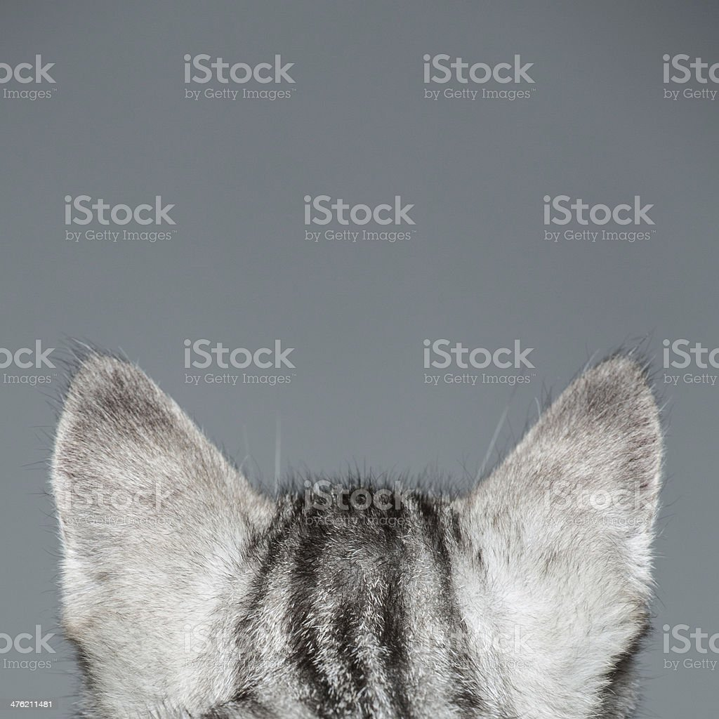 Cat Ears stock photo