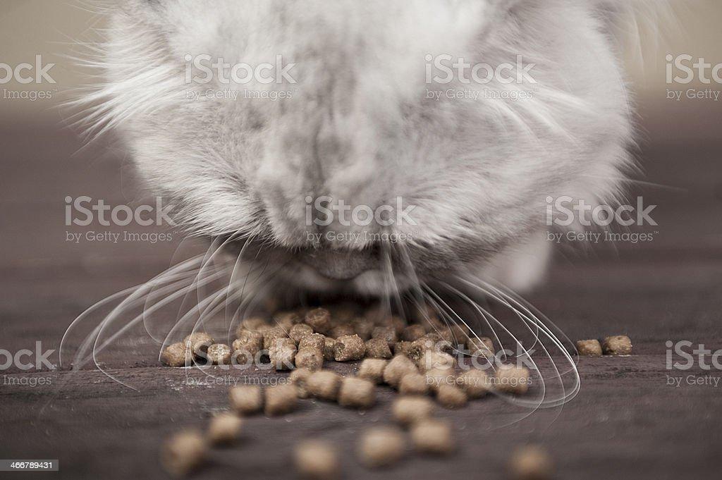 Cat eating dry cat food. stock photo