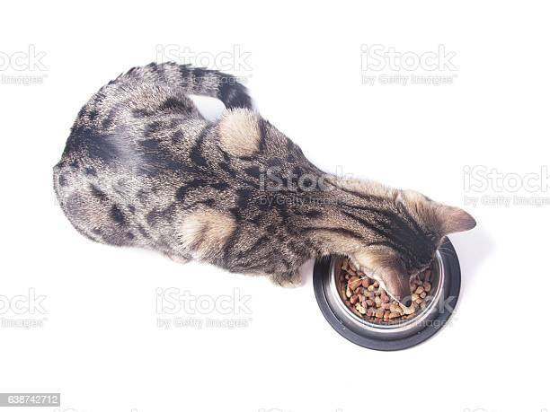 Cat eating dry food from a bowl picture id638742712?b=1&k=6&m=638742712&s=612x612&h=a yb4qsrxtcpdy32xtqxfjxgom1l2org8tjrfbidnzc=
