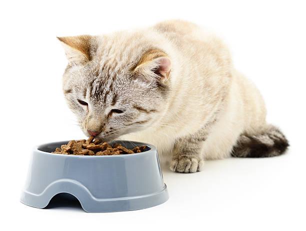 Cat eating dry food picture id513882920?b=1&k=6&m=513882920&s=612x612&w=0&h=qth9cqmb2 hvp3sjfafklqk xn voflgss9f ywpu78=