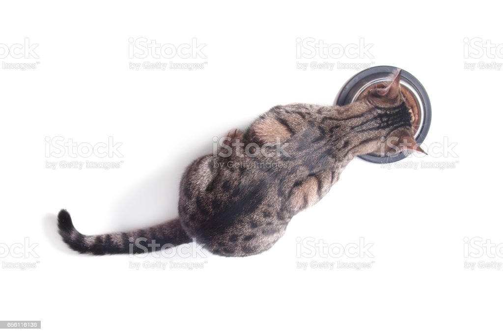 Cat eating food from a bowl. Top view. White background stock photo