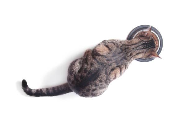 katze essen aus einer schüssel. ansicht von oben. weißem hintergrund - katzengeschirr stock-fotos und bilder