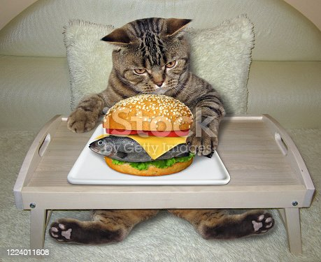 539672394 istock photo Cat eating fresh fish burger in bed 1224011608