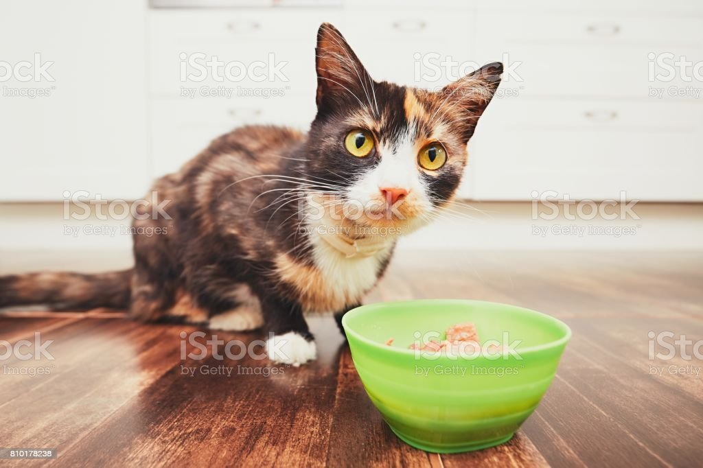 Cat eating from bowl in the kitchen stock photo