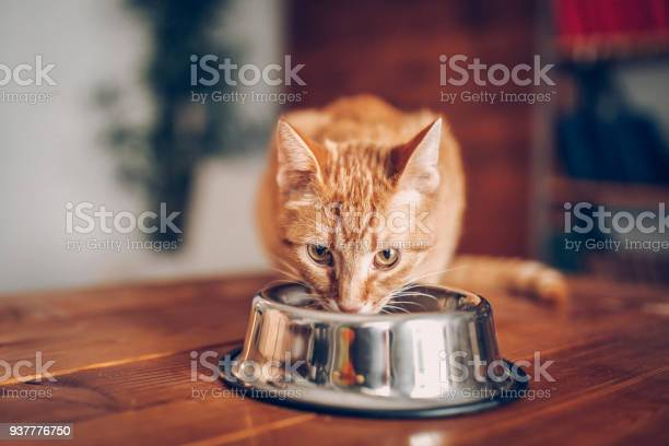 Cat eating out of bowl picture id937776750?b=1&k=6&m=937776750&s=612x612&h=juy edug isgrj8vhmhqy9dqdlrtmqoqsf5wa4kgply=