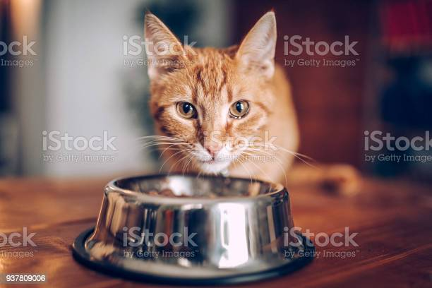 Cat eating out of bowl picture id937809006?b=1&k=6&m=937809006&s=612x612&h=wmisjv77mcoqo0qousuw8m6tp7otpklplfkzvwa9wvy=