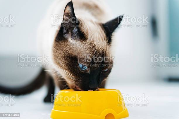 Cat eating pet food picture id472090453?b=1&k=6&m=472090453&s=612x612&h=1h5kwqfua9mpbwin0cz2mgzt3hsr1kvxxgz0jxdzram=
