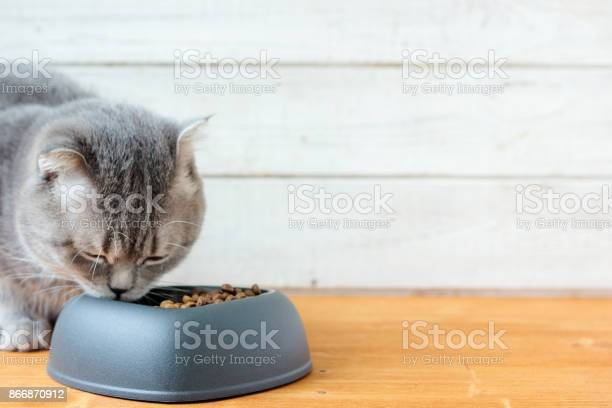 Cat eating pet food picture id866870912?b=1&k=6&m=866870912&s=612x612&h=jz1qpcfquwktbfbq eem2st mazglbni sczkdrw7gi=