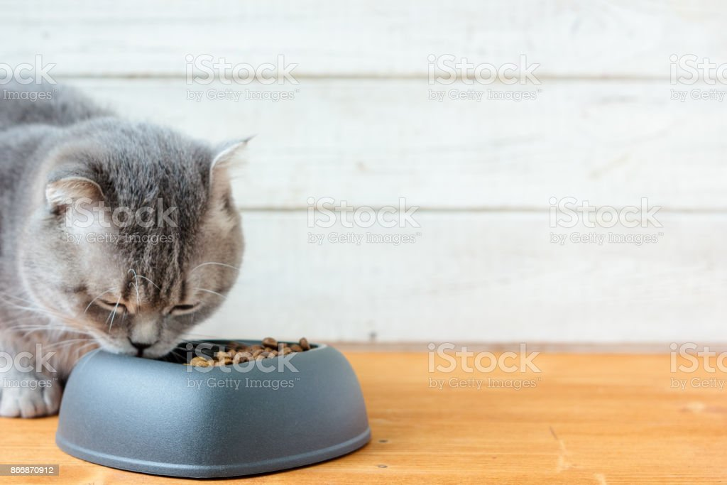 Cat eating pet food stock photo